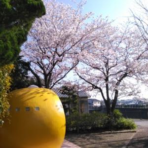 桜とみかん。