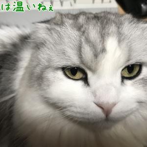 ジョジ○風