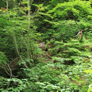 安達太良山 三階滝