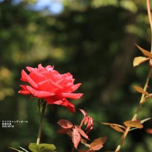 四季の里の花々