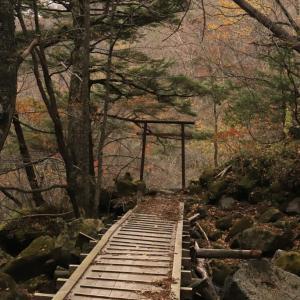 大木の遊歩道  名瀑 幕滝を訪ねて