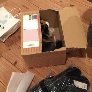 ちょうどいい箱。