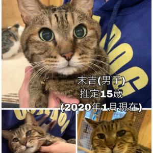 リアル猫活動   今から猫をお届け~神奈川へ~