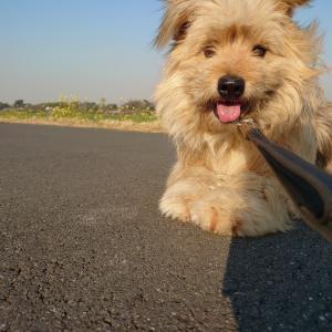 リアル犬猫活動  噛む犬、、、沖縄へ‼️‼️