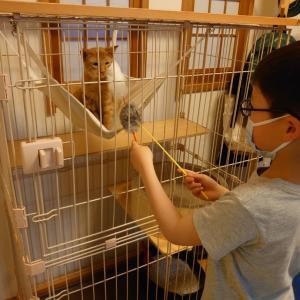 リアル犬猫活動  『猫の‼️お届け奮闘記』