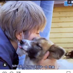 リアル犬猫活動  ノンフィクションの反響‼️‼️
