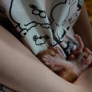 リアル犬猫活動 クラファンのご報告&乳のみ子保護‼️‼️