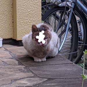 リアル犬猫活動『顔面崩壊猫のフェイスちゃん‼️‼️』