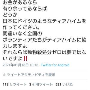 """リアル代表Twitter~""""れいかとちゅらの姉妹大人猫"""""""