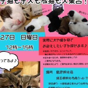"""""""朝霞猫ハウス(シェルター)の様子"""""""
