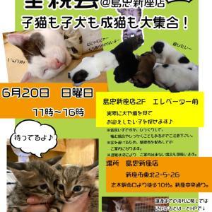 """リアル犬猫活動  里親会デビュー    お礼と激かわ♥"""""""