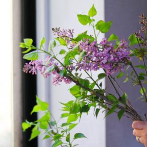 季節の枝物、花のご紹介