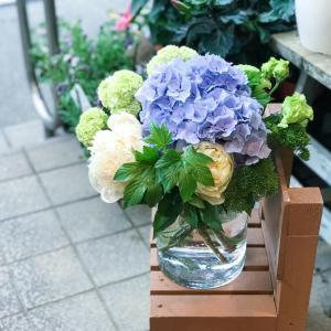 紫陽花の季節始まりました