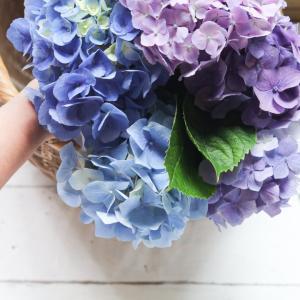 紫陽花を長持ちさせる方法♪オール電化編