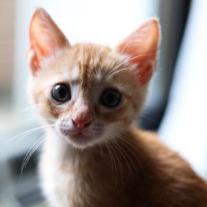 猫と暮らして1ヶ月♪