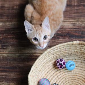 猫と暮らして3ヶ月
