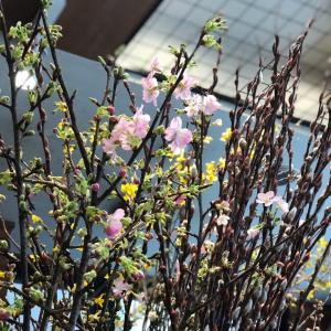 ★春の枝物♪こんな感じです♪