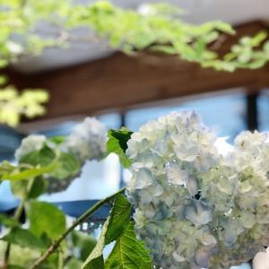 ★お花屋さんの季節の花♪芒種♪