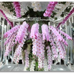 世界らん展2019~花と緑の祭典~ その2