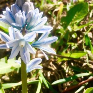 春真っ盛りの4月の南ドイツの気候&ミュンヘンの花粉事情