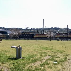 大井川鐵道の車両を眺めながら。