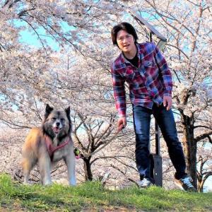 桜の季節!の巻