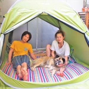 庭にテント張って楽しむ!の巻
