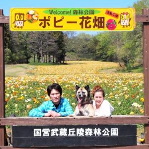 国営武蔵丘陵森林公園のポピー!の巻
