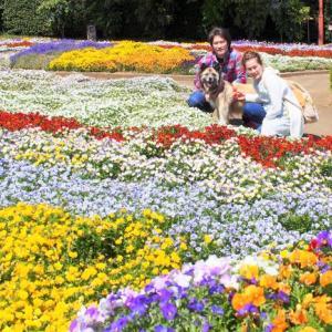 智光山公園は花がいっぱい!の巻