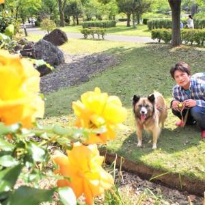 日本一長いバラのトンネル!(平成の森公園)の巻