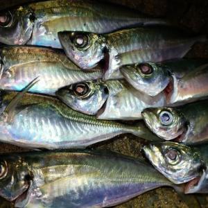 横浜、アジングで初ルアー「魚子バイブ」のインプレ