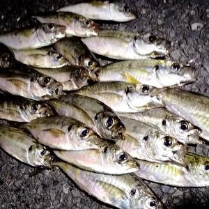 横浜、たった2秒のフォールで釣るアジング