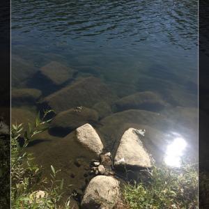 初水系タナゴ調査