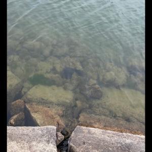 お昼から雨なんで(タナゴ釣り)