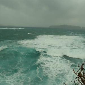 小笠原母島 台風19号(ハギビス)の爪痕