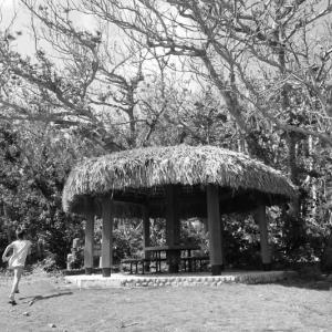 【レジェンド・ストーリー】戦前の母島農家話