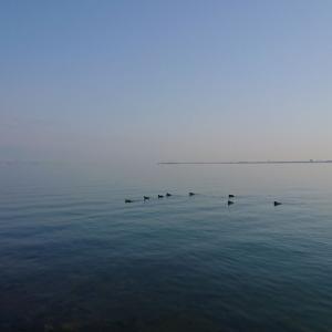 今朝のエビメタルでの釣行・6