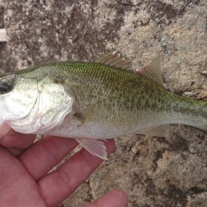 今朝の釣行・24