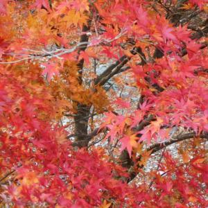 終わりかけの紅葉~狭岩渓へ~