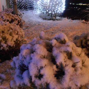 雪とイルミネーション