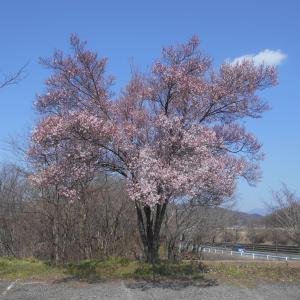 ゆっくり近付く春
