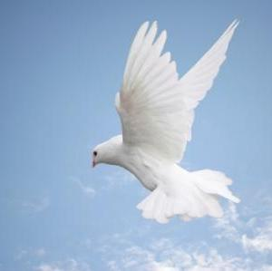 白い鳩の記憶