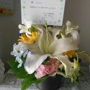 ノラちゃんへのお花と義父の転院