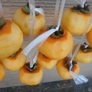 干し柿の完成と流星群