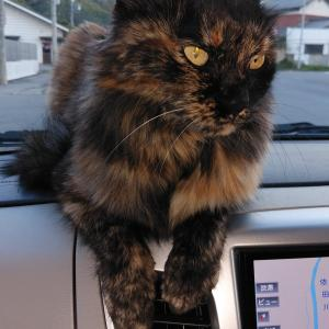 長野朝日放送さんに断られた猫動画