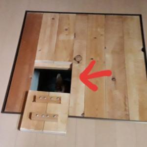 夏の暑さ対策の為の空間が、縞三毛猫なめこのいりこ部屋になった(゜))