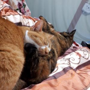 冬が来て、スライムのようにくっつきだす猫型の毛玉たち(ФωФ)