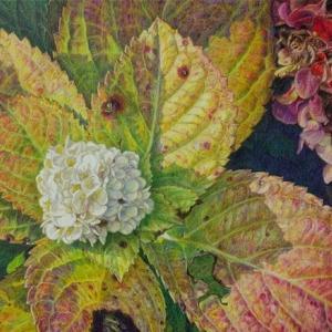 ・ 花 ・ 植物   fiori e pianta