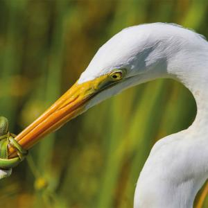 ・ 鳥たちの、本当に信じられないような素晴らしい写真 10枚!