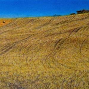 ・ トスカーナの麦畑 変更仕上げ と、 動物の可笑しな写真を